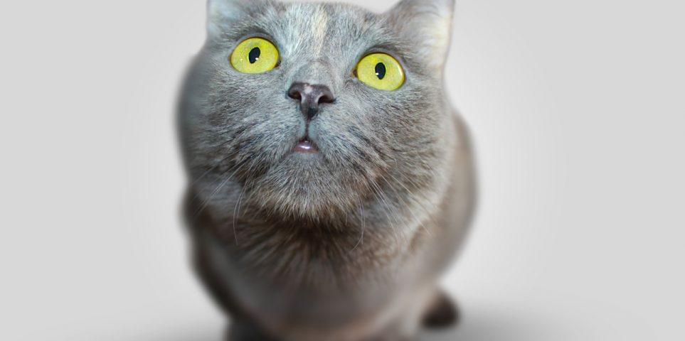 BrightPoint_cat